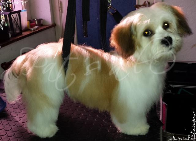 Toilettage chiens chats salon toilettage pat 39 s l 39 a feschaux - Ouvrir un salon de toilettage ...